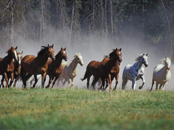 Amazing pictures of horses