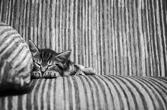 cats photos 18 575x380 35 Adorable Funny Cats Pictures