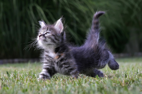 cat cute pictures