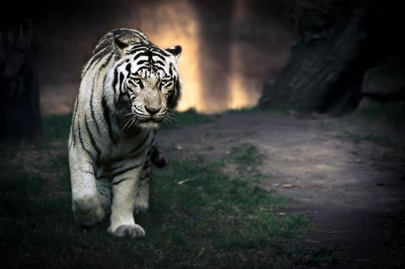 [تصویر:  animals-photography-40-575x383.jpg]